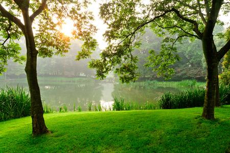 木の後ろに太陽が昇る、朝の公園