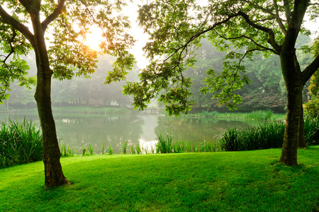 park in the morning, the sun rises behind the trees