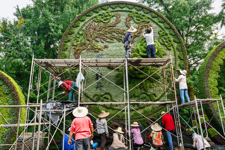 chinese phoenix: Hangzhou, China - on August 26, 2015: Chinas horticultural workers in hangzhou botanical garden workers, they use plants pose beautiful animal image of the phoenix. Editorial