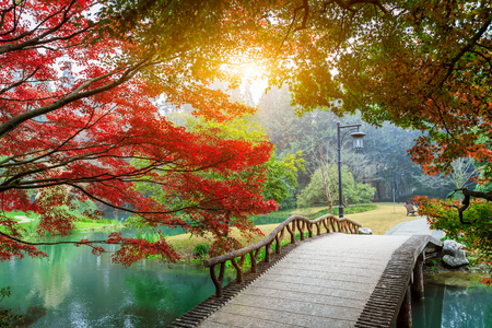 waterside: maple leaves and Small bridge in Chinese garden