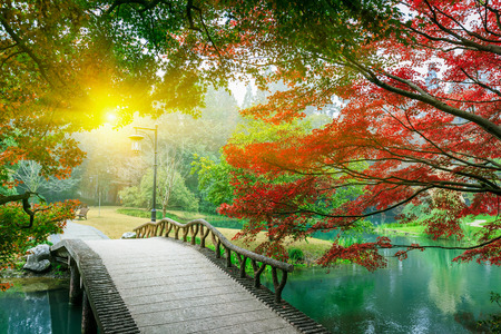 red sunset: maple leaves and Small bridge in Chinese garden during Stock Photo