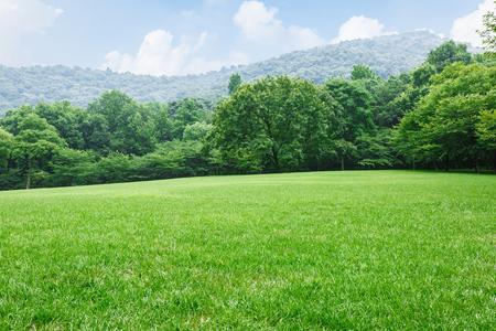 緑の芝生と森の中の自然の風景 写真素材