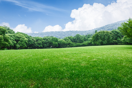 Field of green grass and blue sky