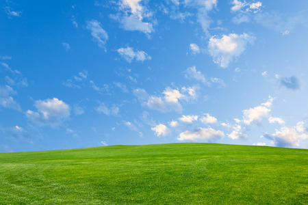 lawn grass: Field of green grass and blue sky