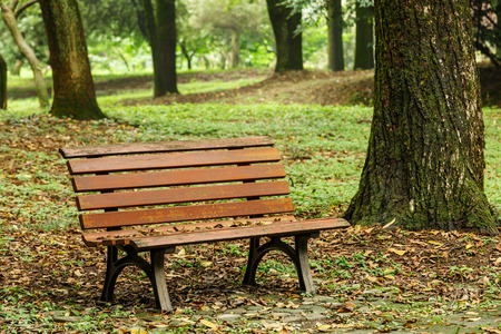 wooden bench in the quiet city park