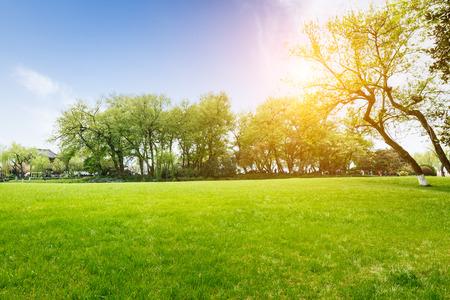 春の公園の緑の芝生