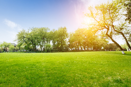 The green lawn in the spring park
