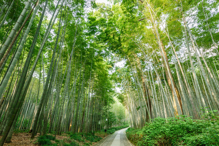 forest trail: Quiet Bamboo forest trail in Hangzhou, China