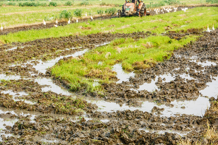 cultivated land: Agricultural tractor cultivated land in the paddy fields