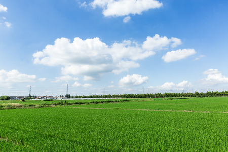 Rural green paddy fields under a blue sky and white clouds