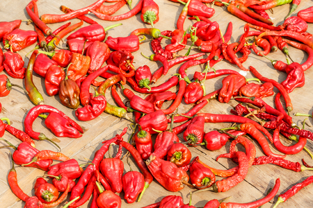 pimiento: Red chili drying in the sun