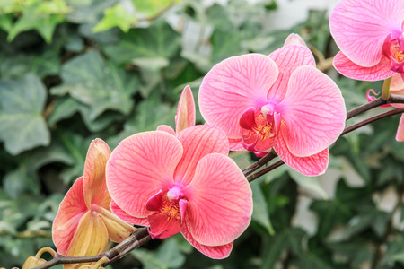 the natural world: Beautiful orchid flowers bloom in natural world Stock Photo