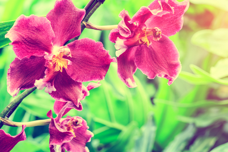 the natural world: orchid flowers bloom in natural world
