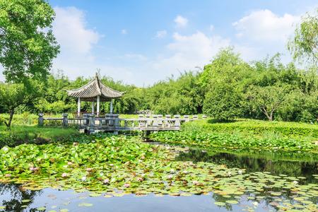 turismo ecologico: summer view at park Foto de archivo