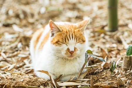 A dozing cat in outdoors
