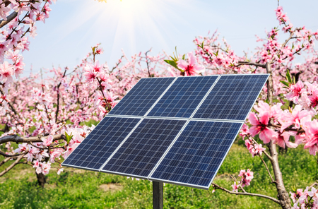 Solar energy panels in the peach forest Imagens