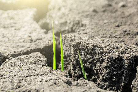 Green grass sprout grow on dry land,concept background Imagens - 78582434