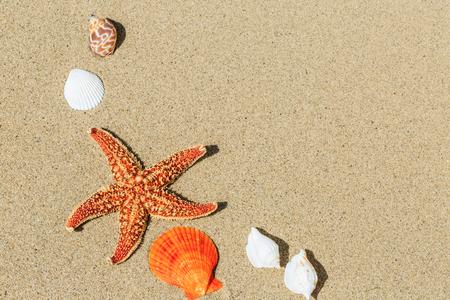 starfish and Shells on sandy beach