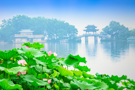 lotus in Hangzhou West Lake,China Stock Photo