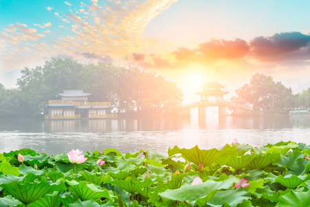 Hangzhou West Lake blooming lotus and Chinese pavilion architectural landscape, China 版權商用圖片