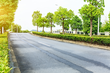 Country asphalt road through the green forest