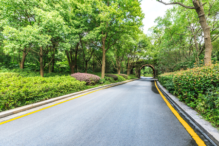 drive through: Country asphalt road through the green forest