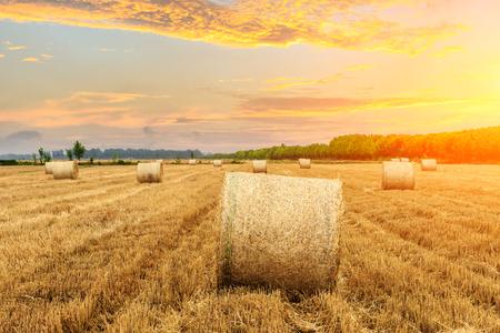 Round straw bales on farmland Imagens
