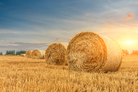 Round straw bales on farmland