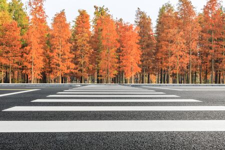 Empty asphalt road and beautiful colorful forest in autumn