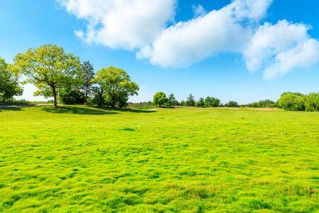 Green grass and tree under blue sky. Standard-Bild
