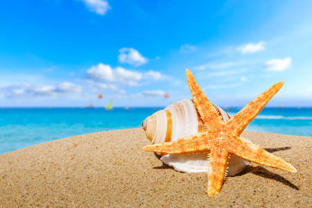 Starfish and conch on a beach sand, summer holiday background.