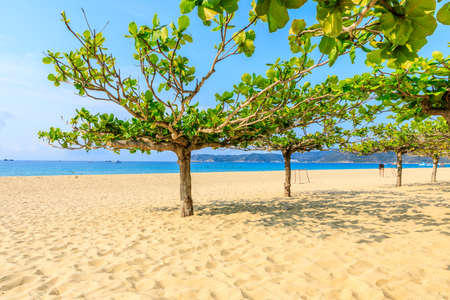 Green tree on the beach by the sea. Stockfoto
