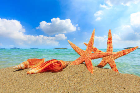 Starfish and conch on a beach sand, summer holiday background. Standard-Bild