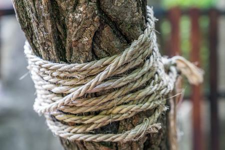 Bundled tree Stock Photo