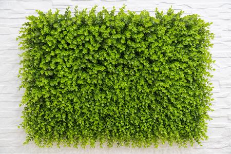 Plant muur Stockfoto