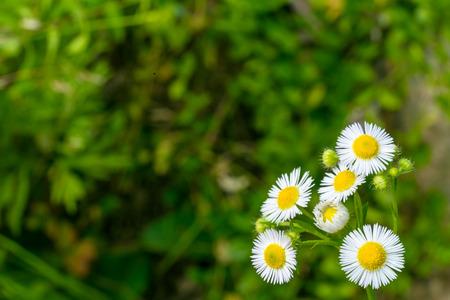 Roadside wildflowers Stock Photo