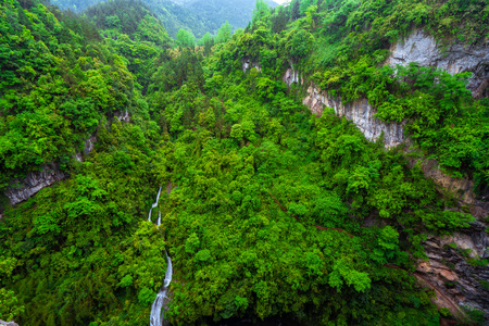 Overlooking the green forest river