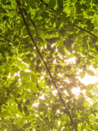 The sun shone through the luxuriant leaves