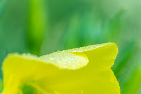A macro shot of a dewy morning leaf Stock Photo