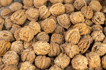 Piles of wild walnuts