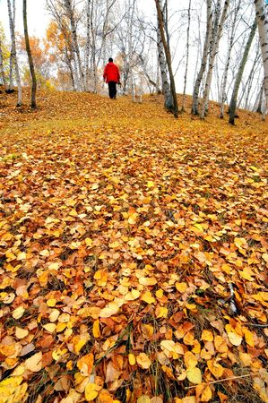 iuml: The autumn woods                             Stock Photo