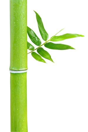 Bamboo on white background photo