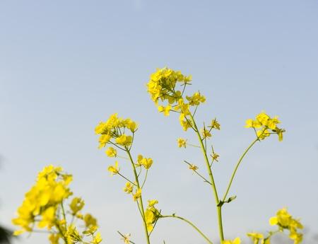 cole: cole fiore