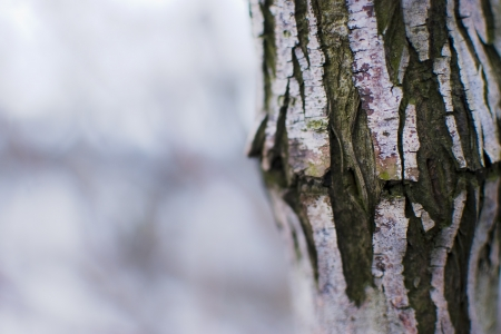 definite: trunk of a tree on a white background outdoors