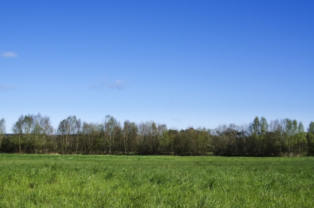 landscape with trees and blue sky in the background photo
