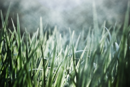 Grass in the morning dew. Natural background. photo