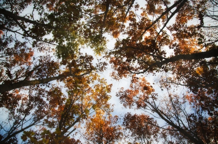woodsy: autumn colors in the forest Caurel in Galicia   Spain Stock Photo