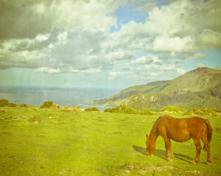 Beautiful brown horse feeding outdoors - yellow tone photo