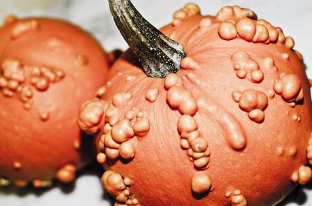warts: Various rare pumpkin with warts