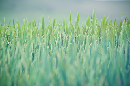 Grass and sky. Sunny spring day. photo